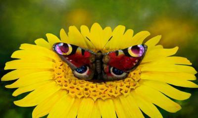 ILUSIÓN ÓPTICA | Esto no es una mariposa