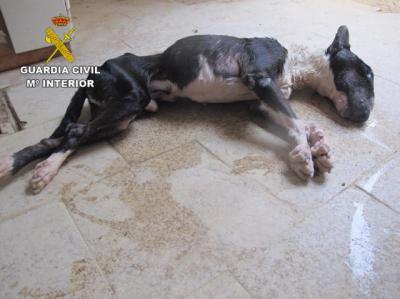 SUCESOS | Investigado por dejar morir de hambre a su perro