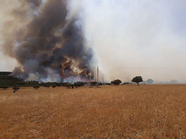 El número de incendios forestales en CLM se ha reducido un 35%