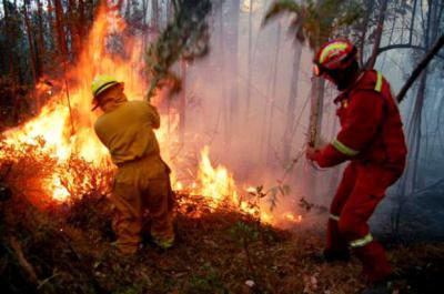 Incendio forestal   Archivo