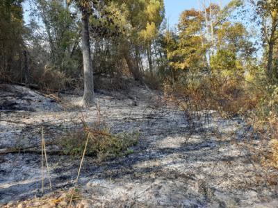Así ha quedado el terreno quemado junto a la presa de Cazalegas