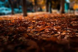 El otoño será más cálido de lo normal