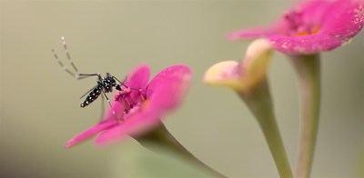Tras la primavera lluviosa, se prevé mayor presencia de insectos que pueden dañar las cosechas