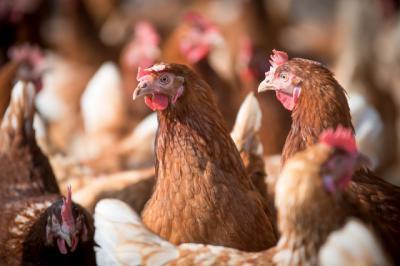 China detecta el primer caso de gripe aviar H10N3 en humanos