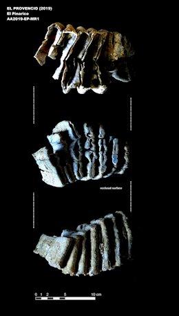 Los trabajos arqueológicos en El Provencio (Cuenca) sacan a la luz restos de mamut y caballo de unos 500.000 años