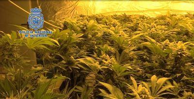 La Policía Nacional lidera la lucha internacional contra la marihuana