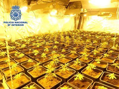 Uno de los cultivos de marihuana incautados
