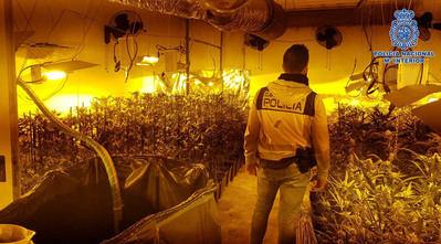 Desmantelado en El Casar de Escalona un centro de cultivo de marihuana con 560 plantas