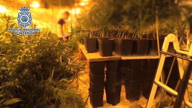 Cae un de los mayores entramados dedicados a importar heroían y cultivar y exportar marihuana  |  POLICÍA NACIONAL