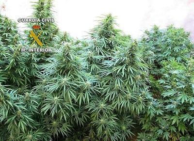 Una investigación iniciada en Toledo permite desmantelar una red que vendía marihuana sintética en Internet