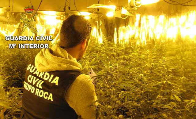 La Guardia Civil detiene a una persona por cultivar marihuana en Guadalajara
