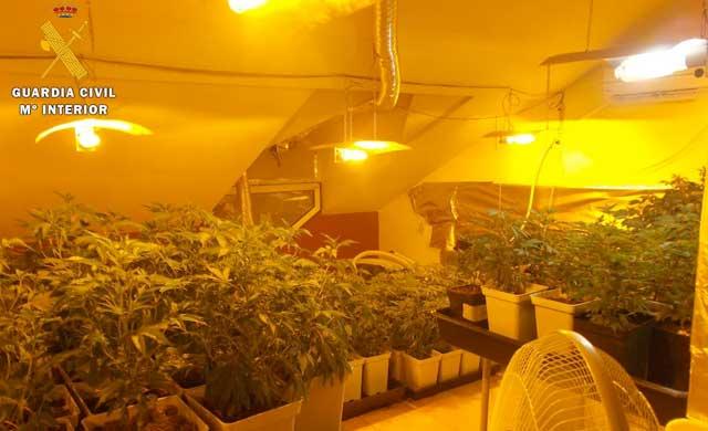 La Guardia Civil detiene a una persona e investiga a otra por cultivar 836 plantas de marihuana