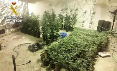 Detenido por cultivar en su casa de Uceda 631 plantas de marihuana