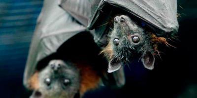 ARDEIDAS instalará refugios para murciélagos en Talavera