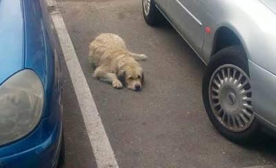 El perro de 'El Pilar' más cerca de tener una familia de acogida