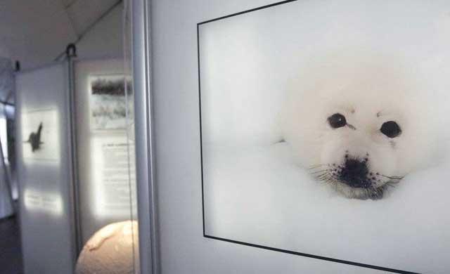 La Alameda acoge hasta el 29 de marzo la exposición 'El Ártico se rompe'