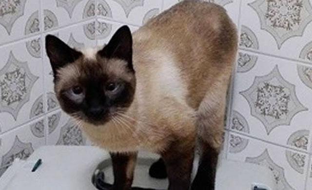 Mil euros de recompensa por devolver a su gata perdida en Talavera