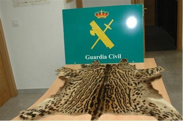 La Guardia Civil incauta una piel de ocelote en la ciudad de Toledo