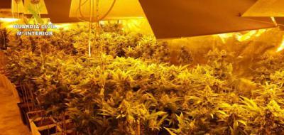 Juzgan en Toledo a los dos acusados de cultivar 800 plantas de marihuana en dos viviendas