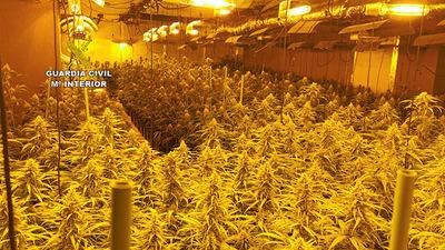 EN UN PUEBLO DE TOLEDO   La Guardia Civil desmantela dos plantaciones de marihuana en dos viviendas