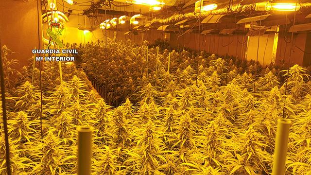 EN UN PUEBLO DE TOLEDO | La Guardia Civil desmantela dos plantaciones de marihuana en dos viviendas