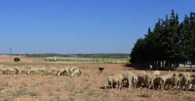 Los ganaderos prevén un invierno complicado por la falta de pastos