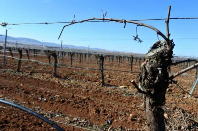 Castilla-La Mancha logra más de la mitad de las plantaciones de viñedo a nivel nacional