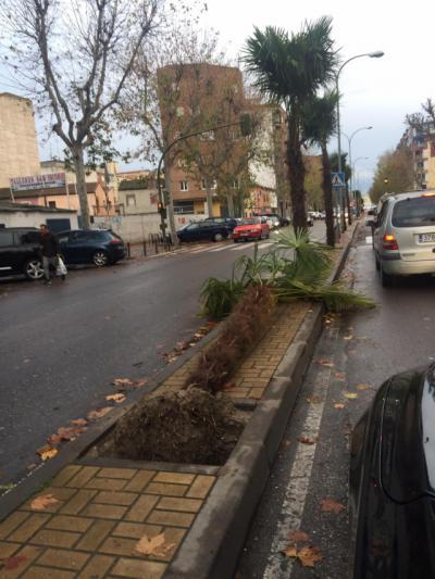 Elsa deja en Talavera palmeras caídas, vientos de 72 kilómetros hora y 45 litros acumulados