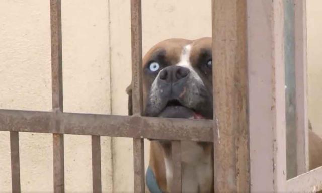 Una mujer herida tras ser atacada en la calle por tres perros de raza peligrosa