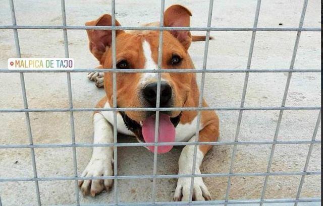 Se busca a Chuki, un perro desaparecido en la zona de Malpica