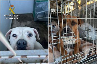 La Guardia Civil rescata a dos perros abandonados en Escalona