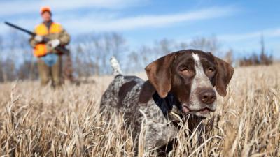 La Ley de Bienestar Animal deja fuera a los perros de caza