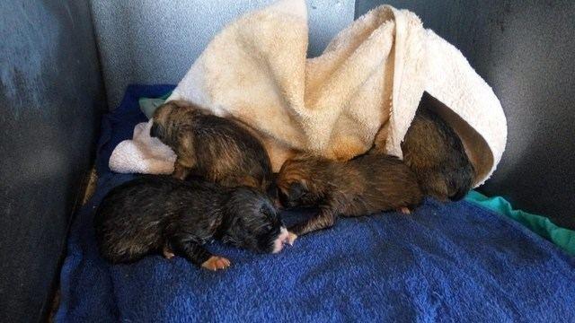 La Policía rescata 8 cachorros de perro en la basura y busca al responsable
