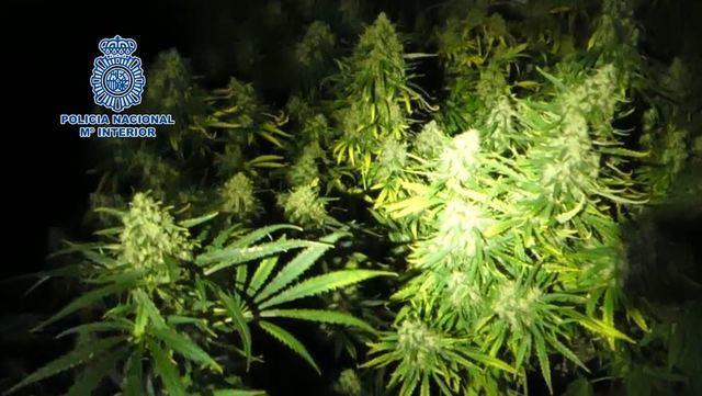 Detenidas 48 personas en una macrooperación contra el menudeo de drogas