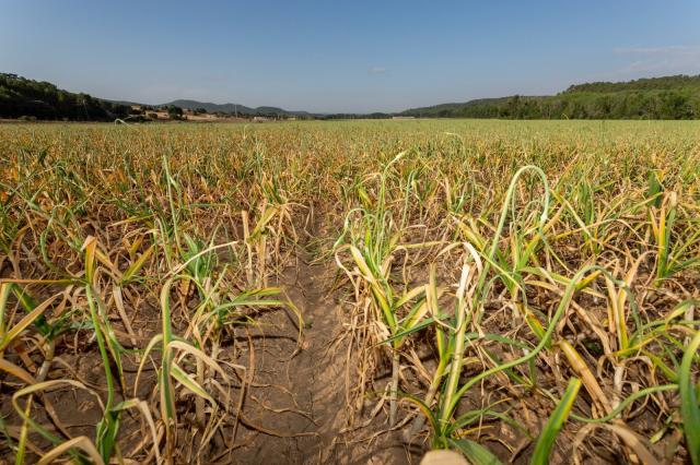 Agricultores de C-LM podrán pedir préstamos en diez entidades bancarias sin tener que justificar necesidad de recursos
