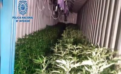 Desmantelado un centro de cultivo de marihuana con más de 3.000 plantas en Calera y Chozas (VÍDEO)
