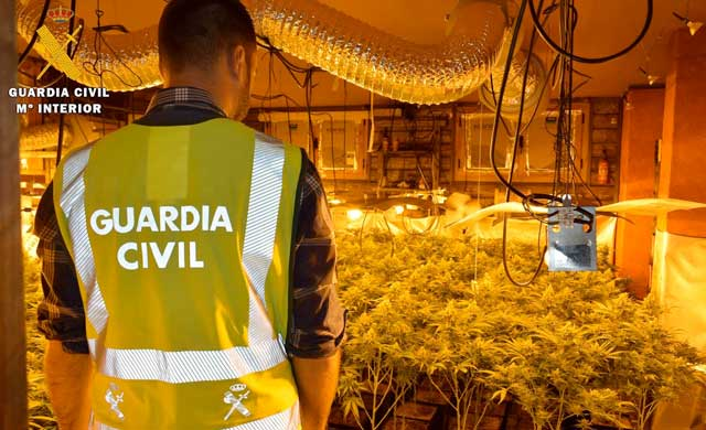 Un detenido en Alberche con 252 plantas de marihuana