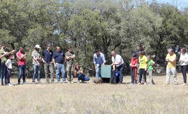 El lince 'Nativo' es el último liberado en la provincia de Toledo