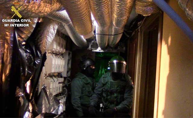 La Guardia Civil incauta 4.300 plantas de marihuana en Layos y Añover de Tajo