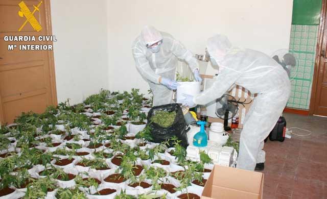 Una persona detenida en Velada con 250 plantas de marihuana