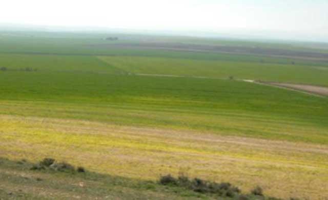 CLM declara Zonas Especiales de Conservación a las Llanuras de Oropesa, Lagartera y Calera y Chozas