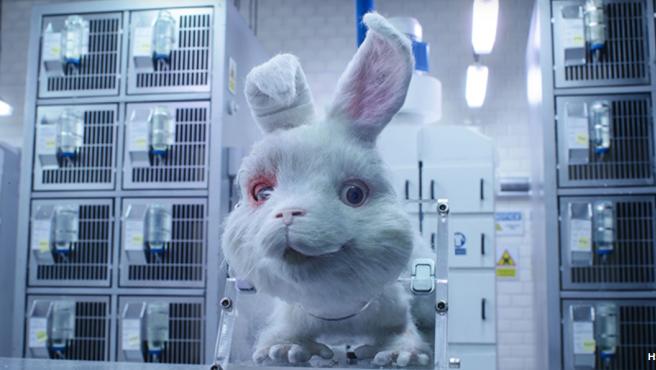 Ralph, la imagen de campaña contra el maltrato animal de Humane Society International.