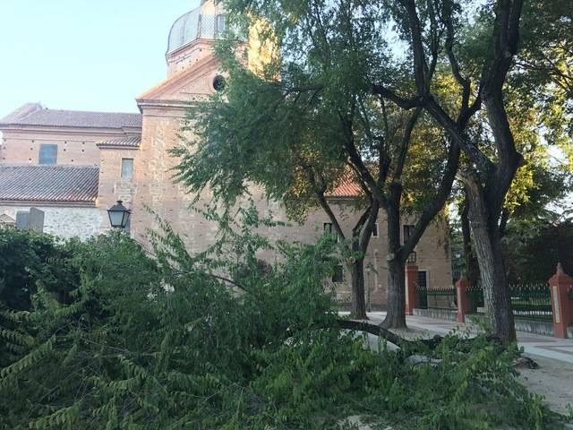 Se desploma una rama en el parque del Prado