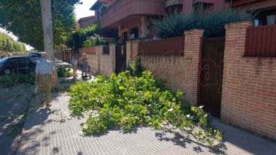 Denuncian el abandono de ramas tras su poda en una calle de Talavera
