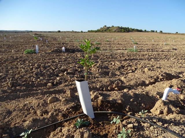 Campos de cultivo de regadío creados ilegalmente en un espacio protegido de la Red Natura 2000, en el Campo de Cartagena (Murcia) © Pedro García / ANSE