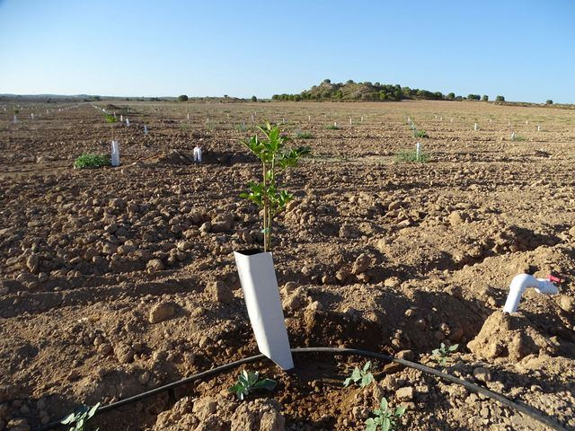 Reclaman una auditoría de los regadíos del Levante para saber cuántos hay ilegales