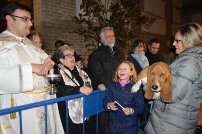 Las mascotas reciben la bendición de San Antón en Talavera de la Reina