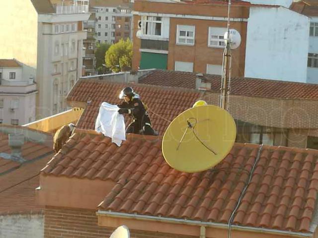 Los bomberos rescatan al buitre leonado en el tejado de un edificio
