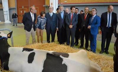 Inaugurado el II Open de Ganado Frisón de Talavera de la Reina