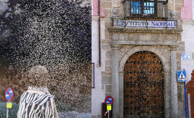 Los mosquitos 'van de cortejo' en San Isidro (GALERÍA DE IMÁGENES)